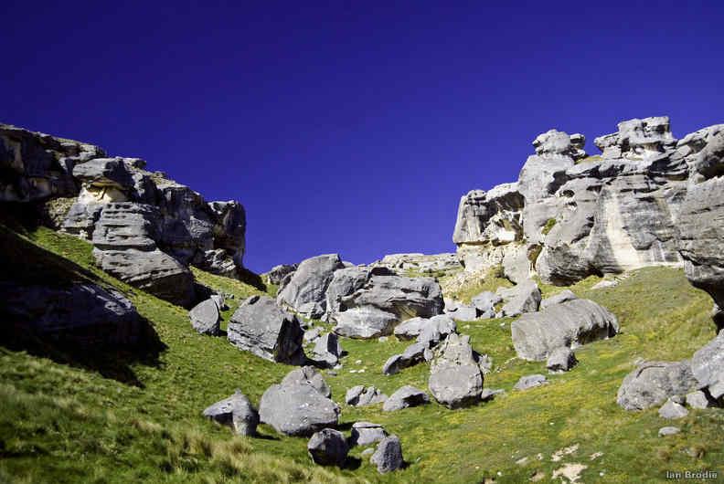 NZ-flock-hill