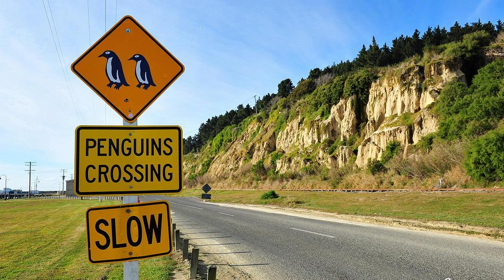 NZ-oamaru-penguin-crossing