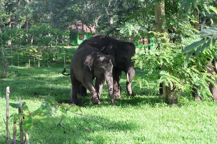 Gentle Giants - elephants