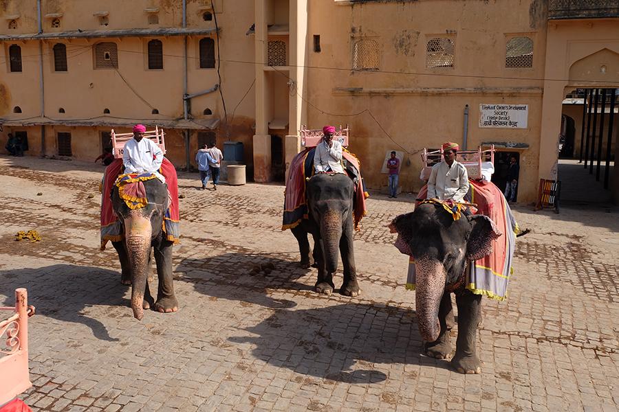 amer fort-elephant